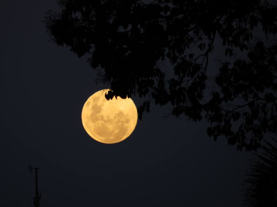 Noites encantadoras